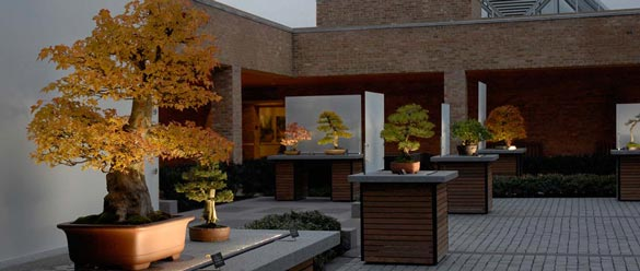 bonsai-courtyard-a_RJC6897-featured