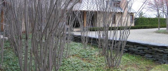 Private-residence-Stowe,-VTShadbush-Grove